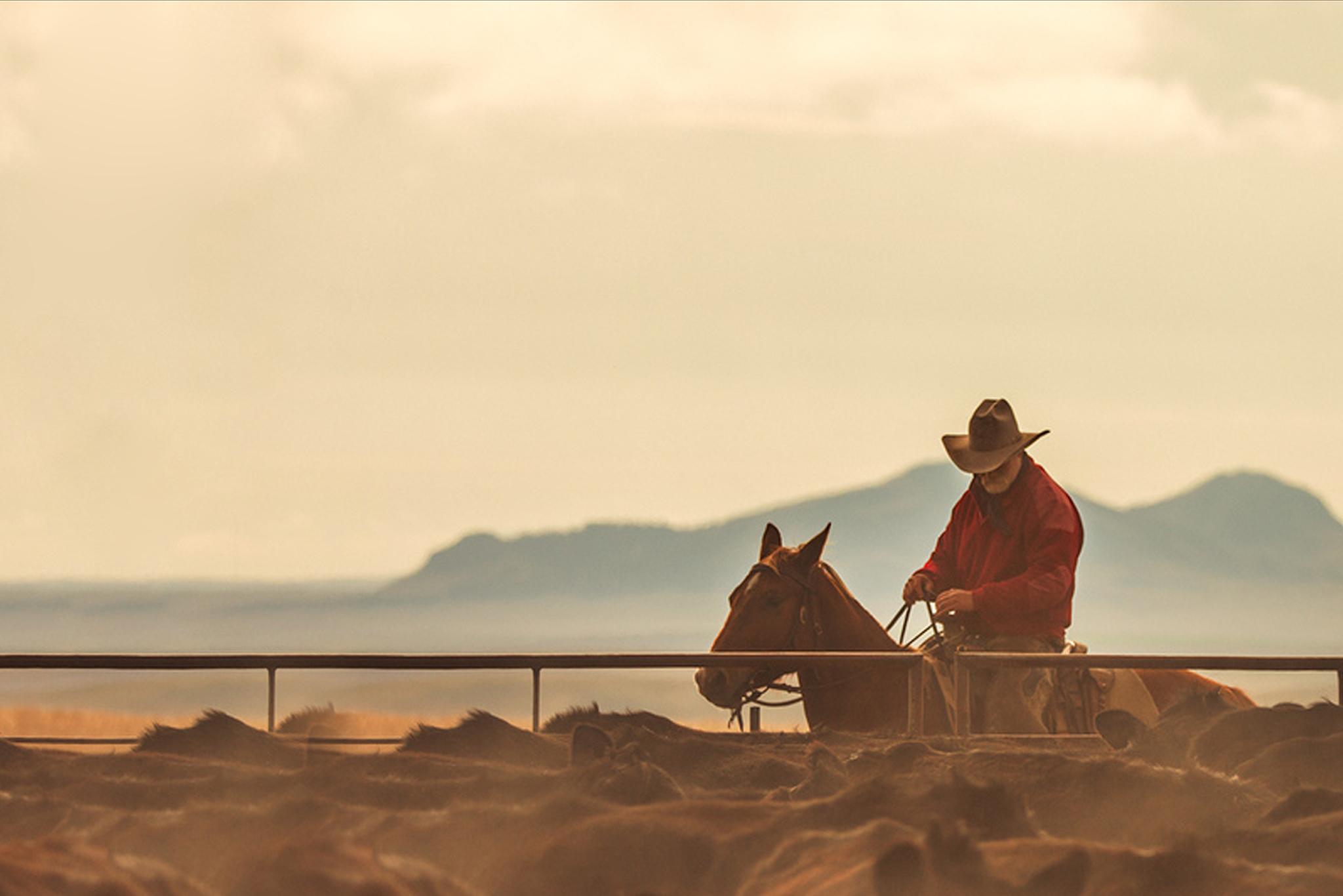 Rancher working cattle on horseback
