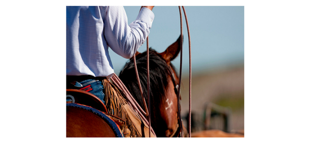A horse and rider compete for Texas 4-H Scholarships for Youth