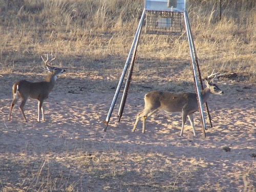 deer gathered around a feeder