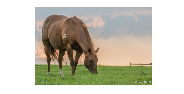 horse grazes on green grass