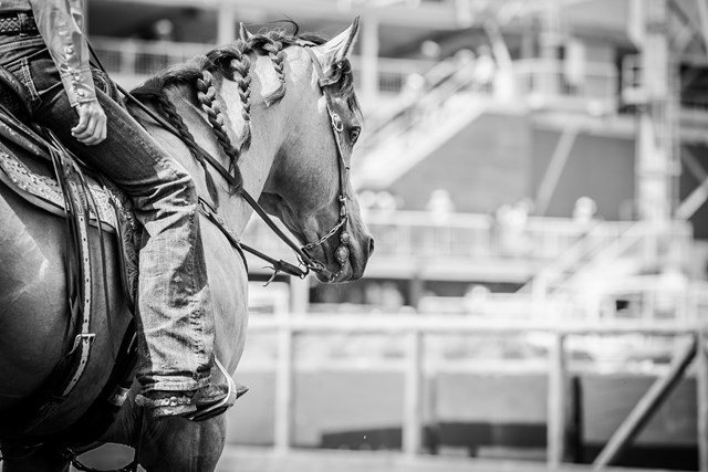 black and white photo of Jackie Ganter's horse in black and white