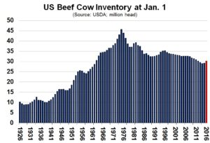 Chart of Cow Inventory Jan 1