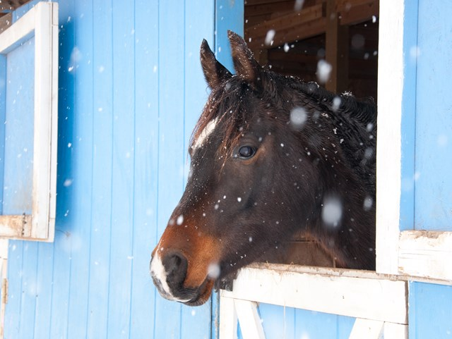 horse in stable while snow falls