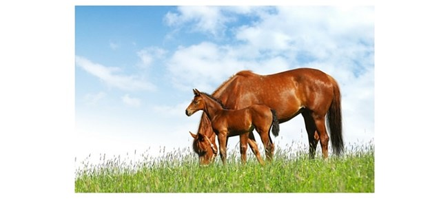 Mare and colt on green grass