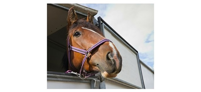 horse sticking it's head out of a trailer