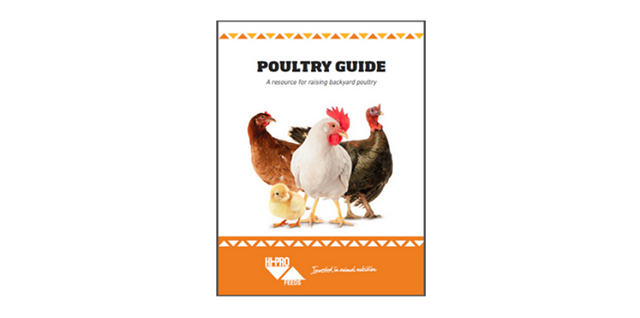 Cover of the Backyard Poultry Guide