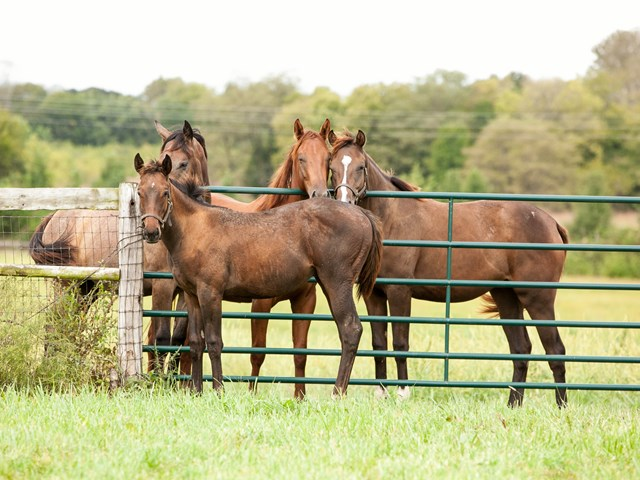 yearling colts stand at a gate