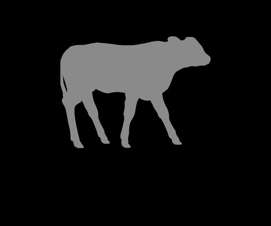 calf icon